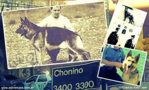 Choninoaproc